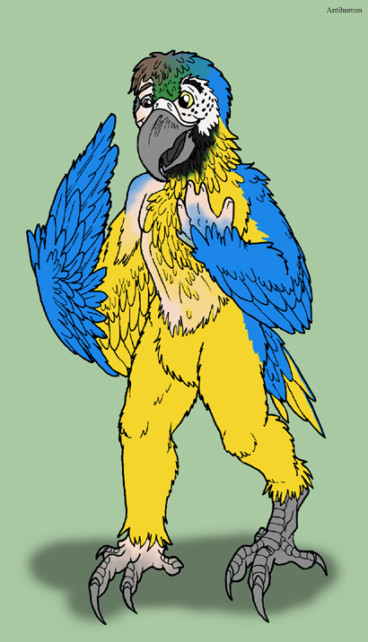 macaw by Antihuman
